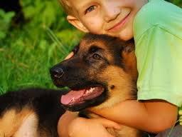 animais que curam